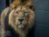 Chester_zoo_6383