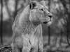 Chester_zoo_6473