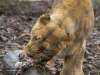 Chester_zoo_6491