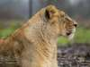 Chester_zoo_6509