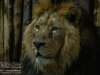 Chester_zoo_6523