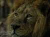 Chester_zoo_6557