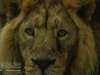 Chester_zoo_6585