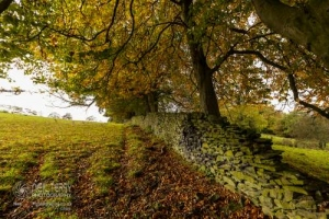 Whinburnhall_Keighley_7046