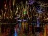 forest+of+light+bradford_5440