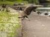 ListerPark_Manningham_Bradford_8991