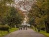 peel+park+bradford+autumn_4261