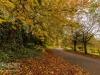 peel+park+bradford+autumn_4286