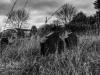 undercliffe+cemetery+bradford_4362