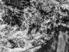 woodside+waterfall+judywoods+bradford_9178