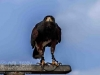 yorkshire_wildlife_park_1