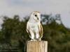 yorkshire_wildlife_park_2