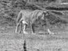 yorkshire_wildlife_park_5