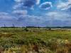 yorkshire_wildlife_park_6